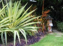 Kwikfynd Tropical Landscaping keely